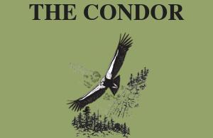 The Condor logo