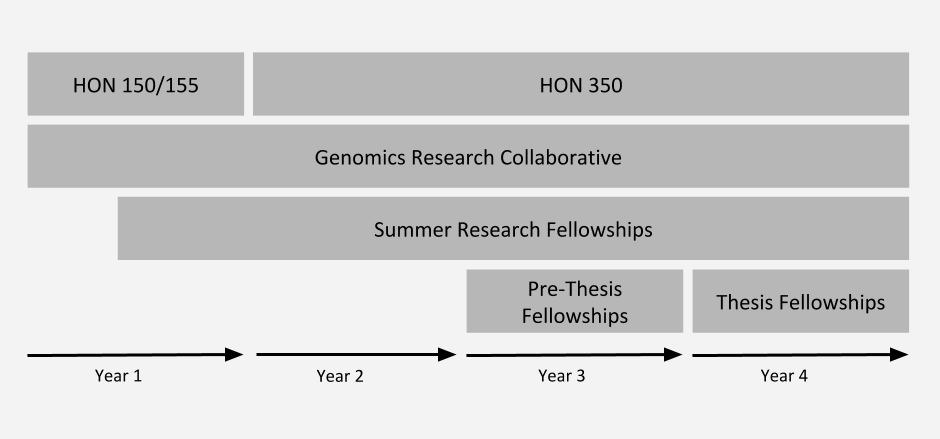 A graphic that shows when which INBRE courses and funding are able to be used by year in undergraduate career. Students can take HON150/155 in their first year, followed by HON350 in their 2nd, 3rd, or 4th year. Students can be involved in the Genomics Research Collaborative during any year. Students can apply for Summer Research Fellowships anytime after their first semester. Students can apply for Pre-Thesis Fellowships during their third year. Students can apply for Thesis fellowships during their 4th year. Please contact us for more information if needed.